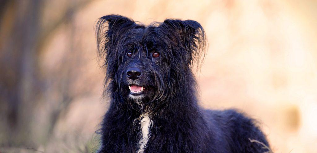 Tierfotografie Hund Aurich