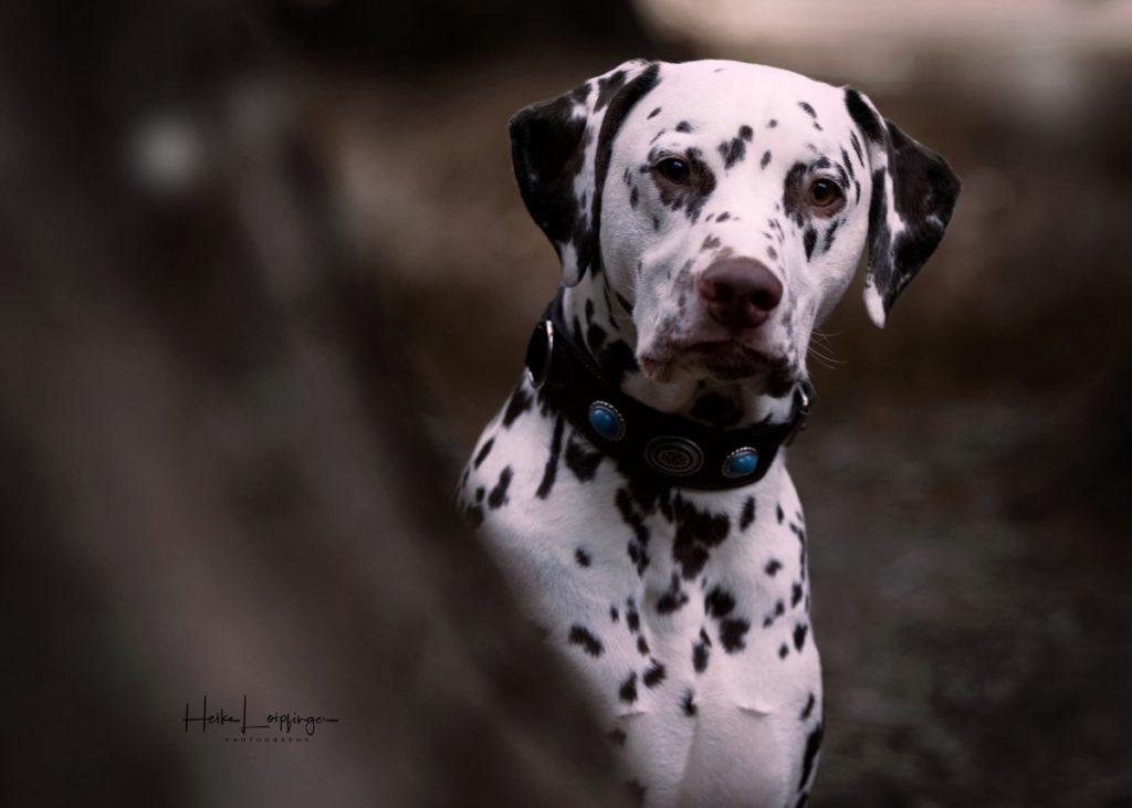 Tierfotografie Hund Stuttgart