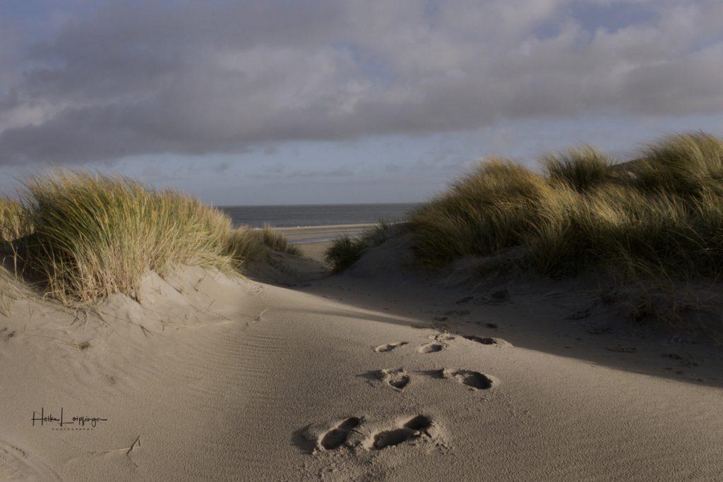 Texel Dünen