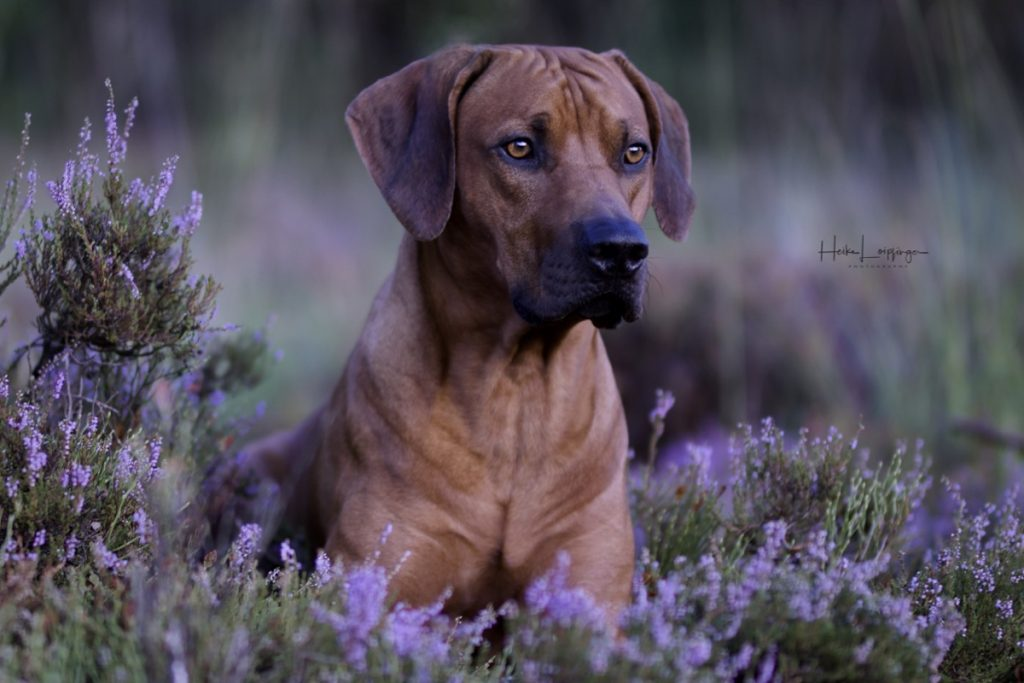 Tierfotografie Hund Böblingen