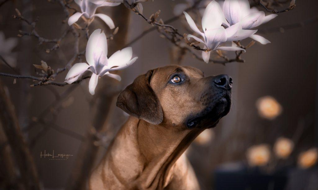 Tierfotografie Hund Renningen