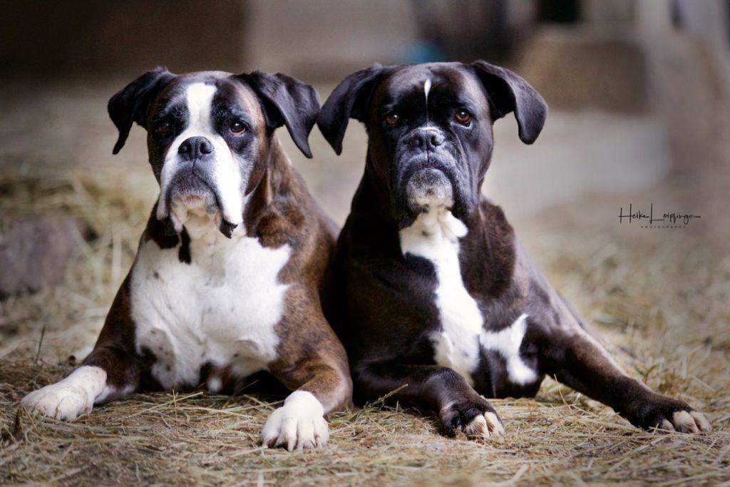 Tierfotografie Hund Aspach