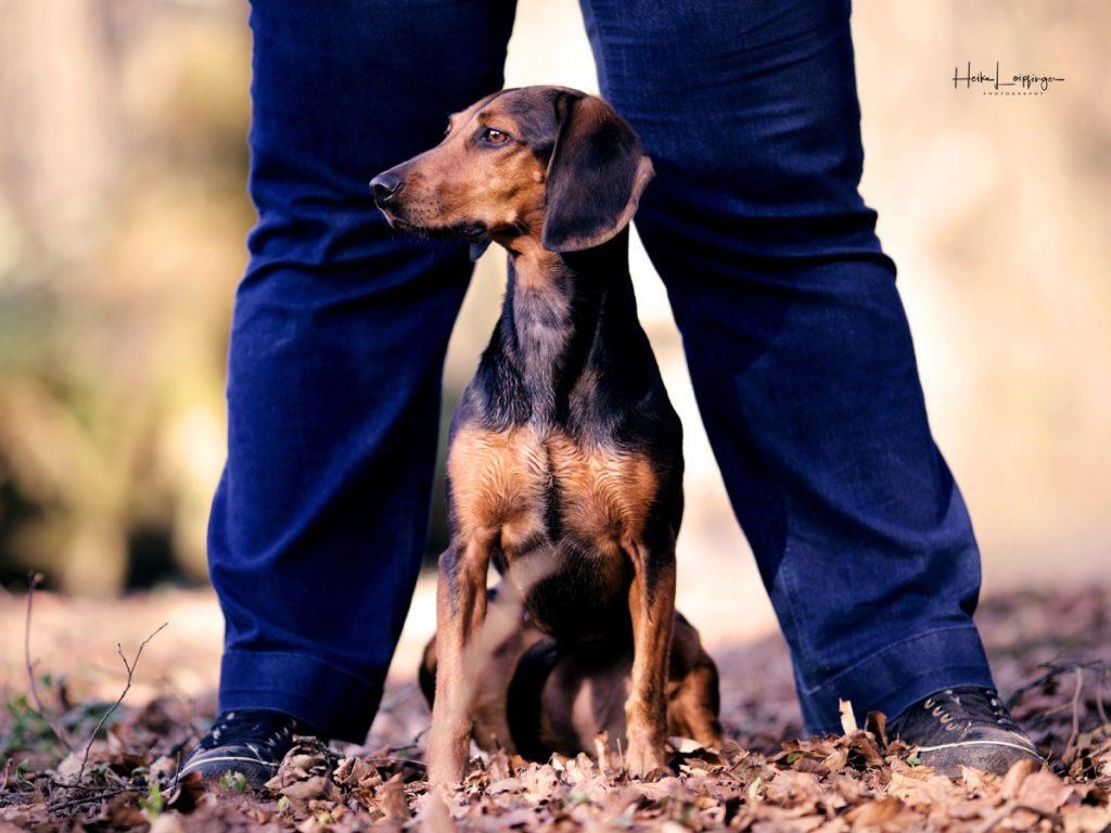 Tierfotografie Hund Bracke Ludwigsburg