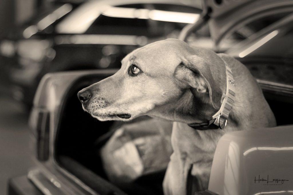 Tierfotografie Hund Werkstatt Bietigheim