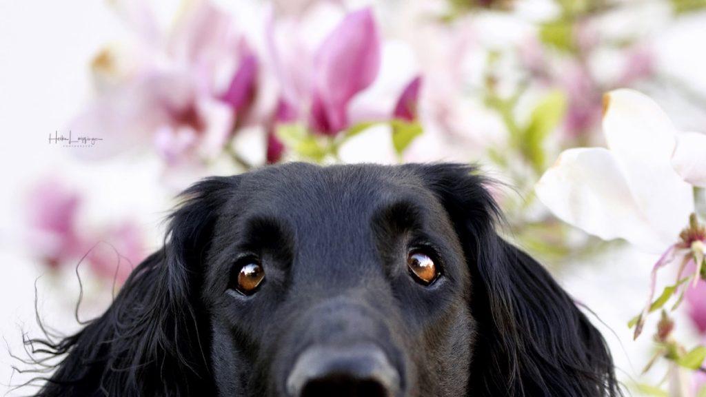Tierfotografie Hund Magnolie Ludwigsburg