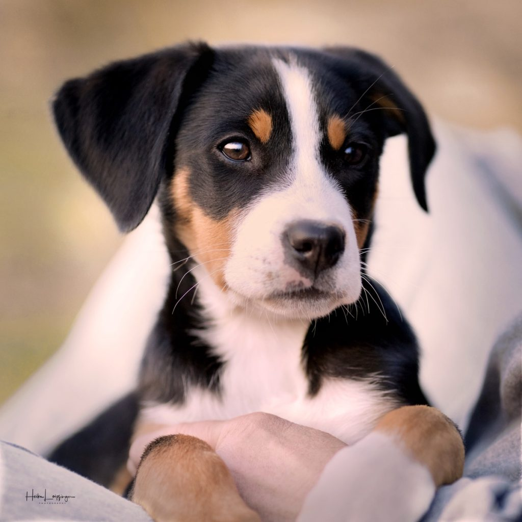 Tierfotografie Hund Welpe Ludwigsburg