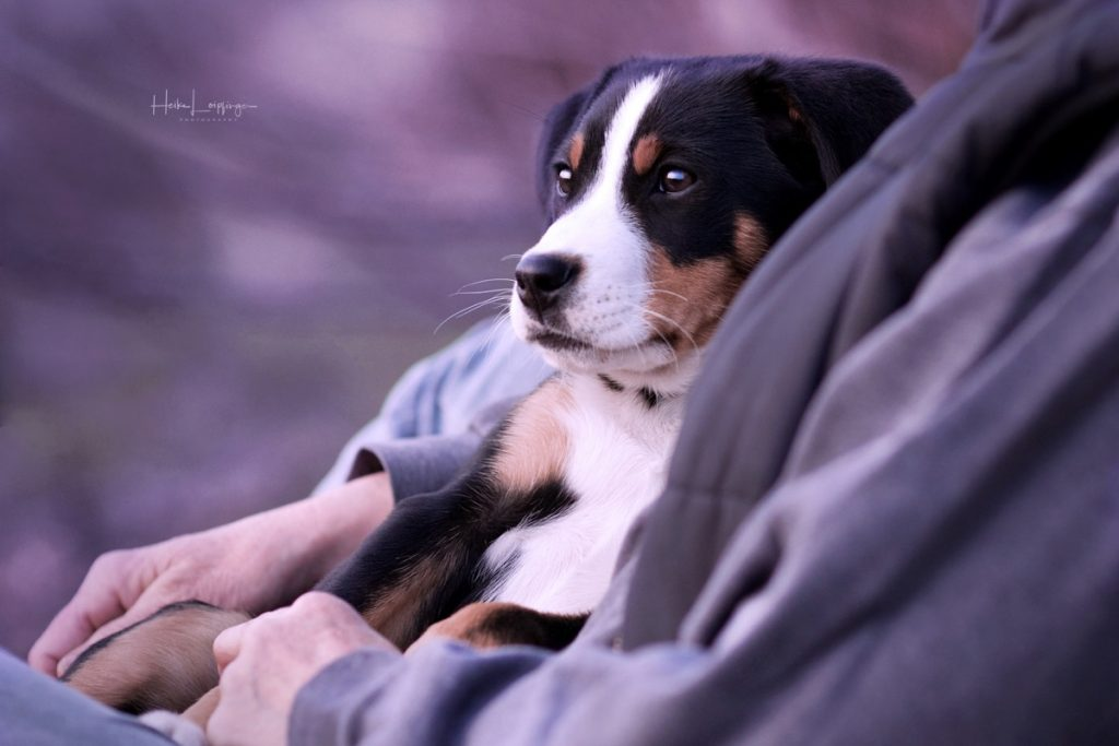Tierfotografie Welpe Hund Ludwigsburg