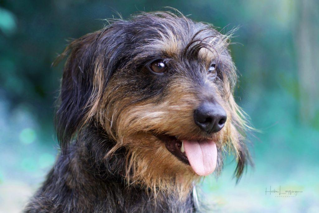 Tierfotografie Hund Backnang