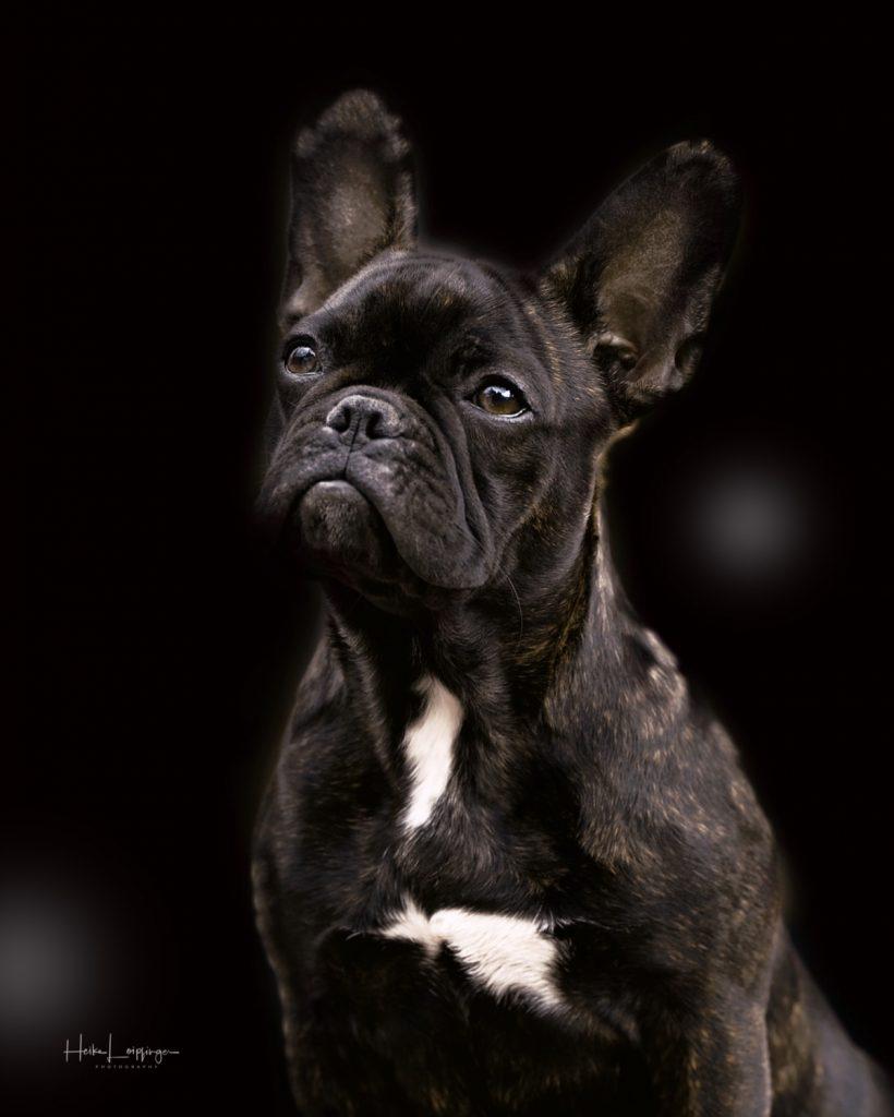 Tierfotografie Hund Oberriexingen