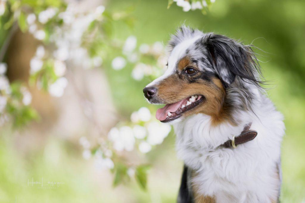 Tierfotografie Hund Illingen