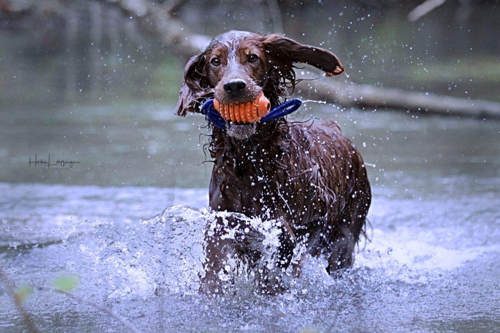 Tierfotografie Hund Ulm