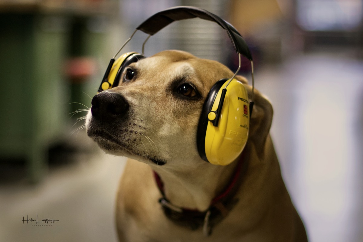 Tierfotografie Hund Heilbronn