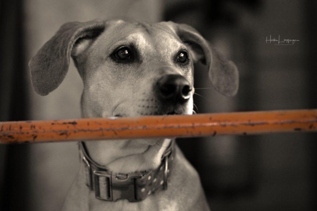 Tierfotografie Hund Werkstatt Korntal