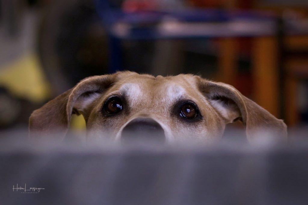 Tierfotografie Hund Werkhalle Ludwigsburg