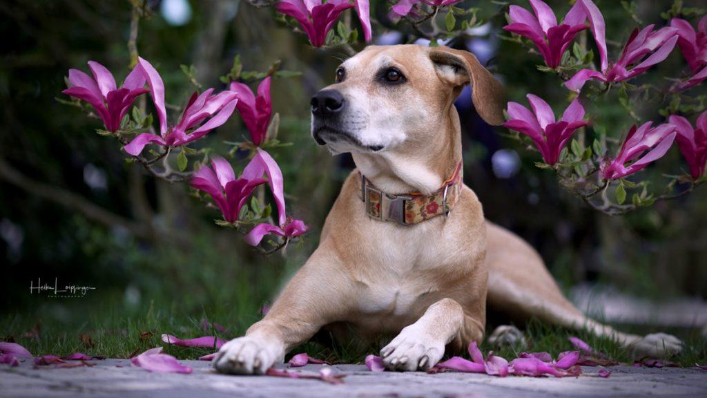 Tierfotografie Hund Magnolie Pforzheim