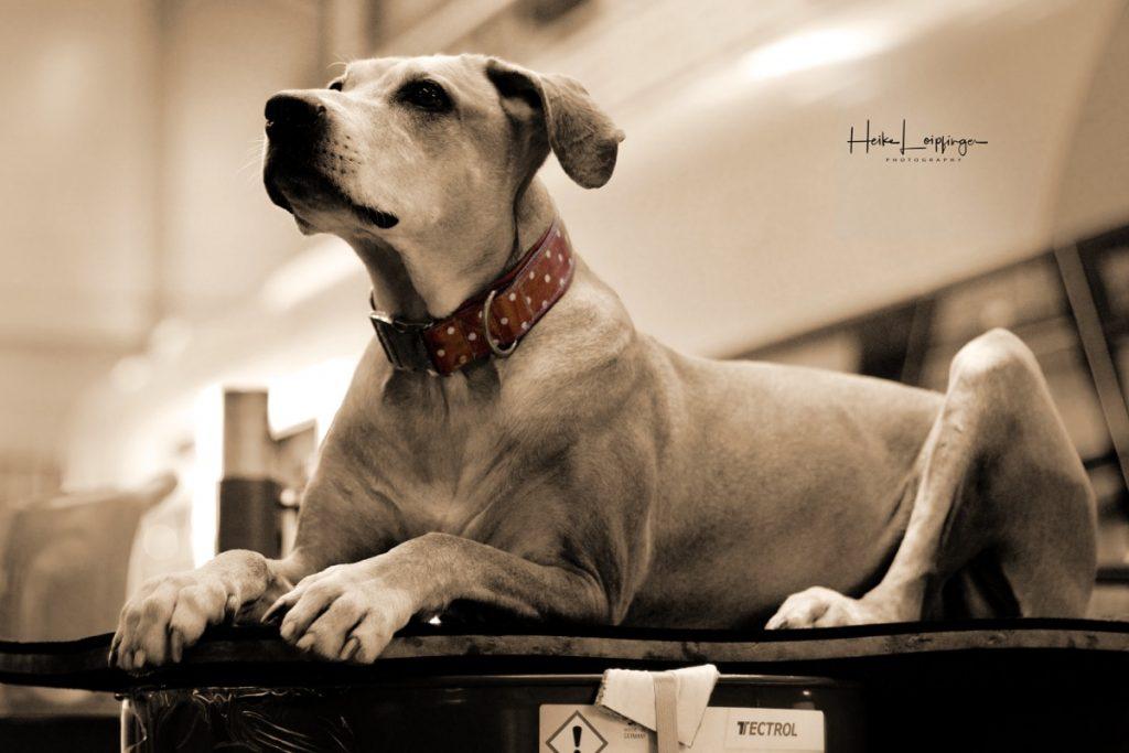Tierfotografie Hund Werkhalle Korntal