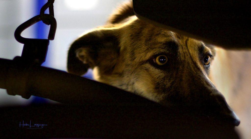 Tierfotografie Hund Zug Stuttgart