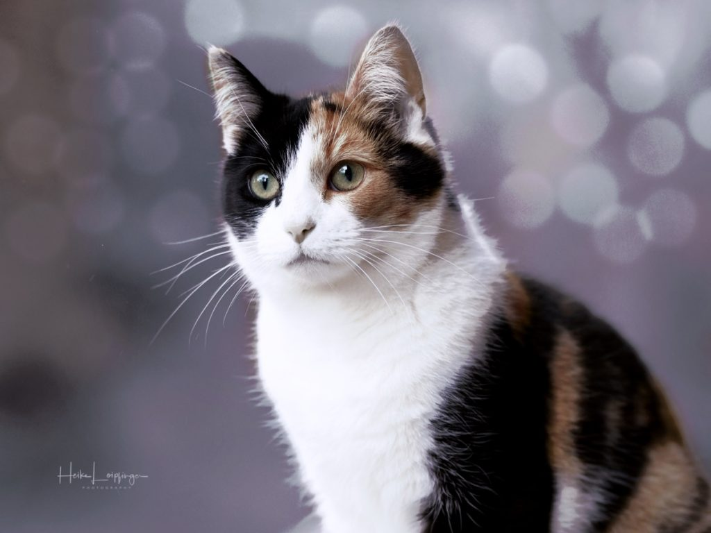 Tierfotografie Katze Asperg