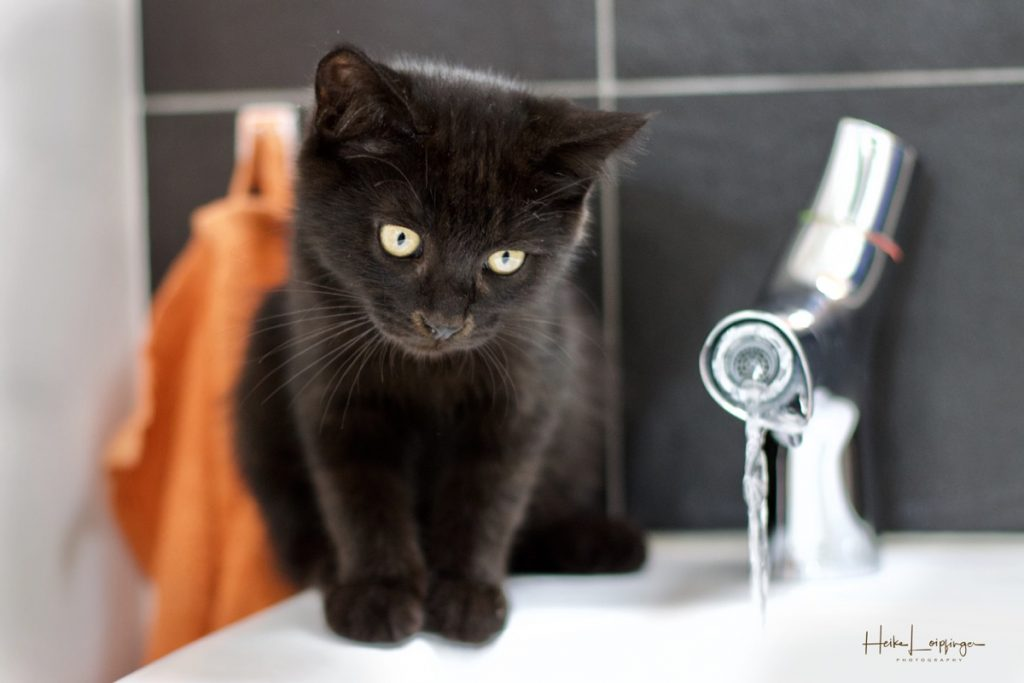 Tierfotografie Katze Gerlingen