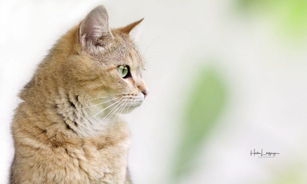 Tierfotografie Katze Ditzingen