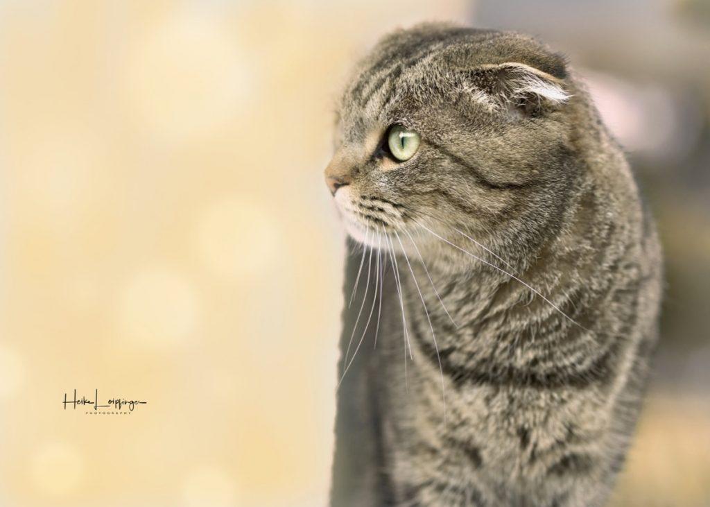 Tierfotografie Katze Feuerbach