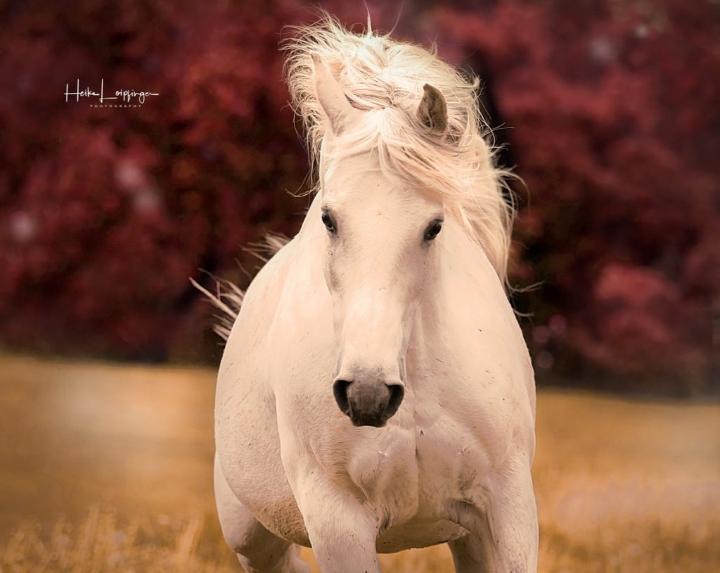 Tierfotografie Pferd Backnang