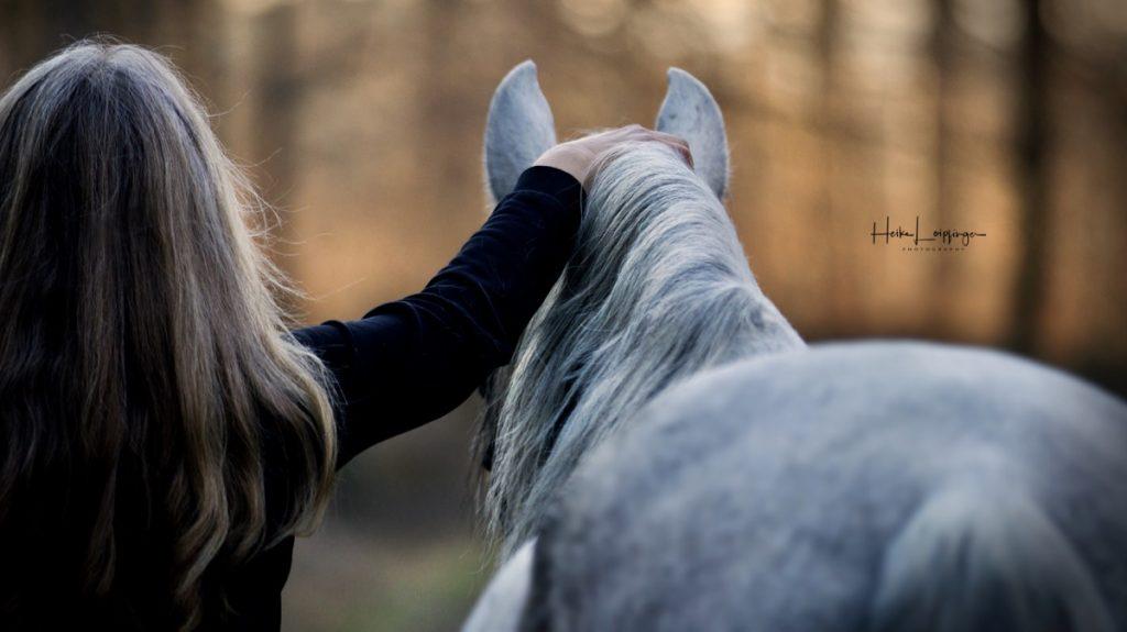 Tierfotografie Pferd Lusitano Ludwigsburg