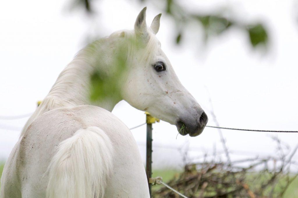 Tierfotografie Pferd unbearbeitet