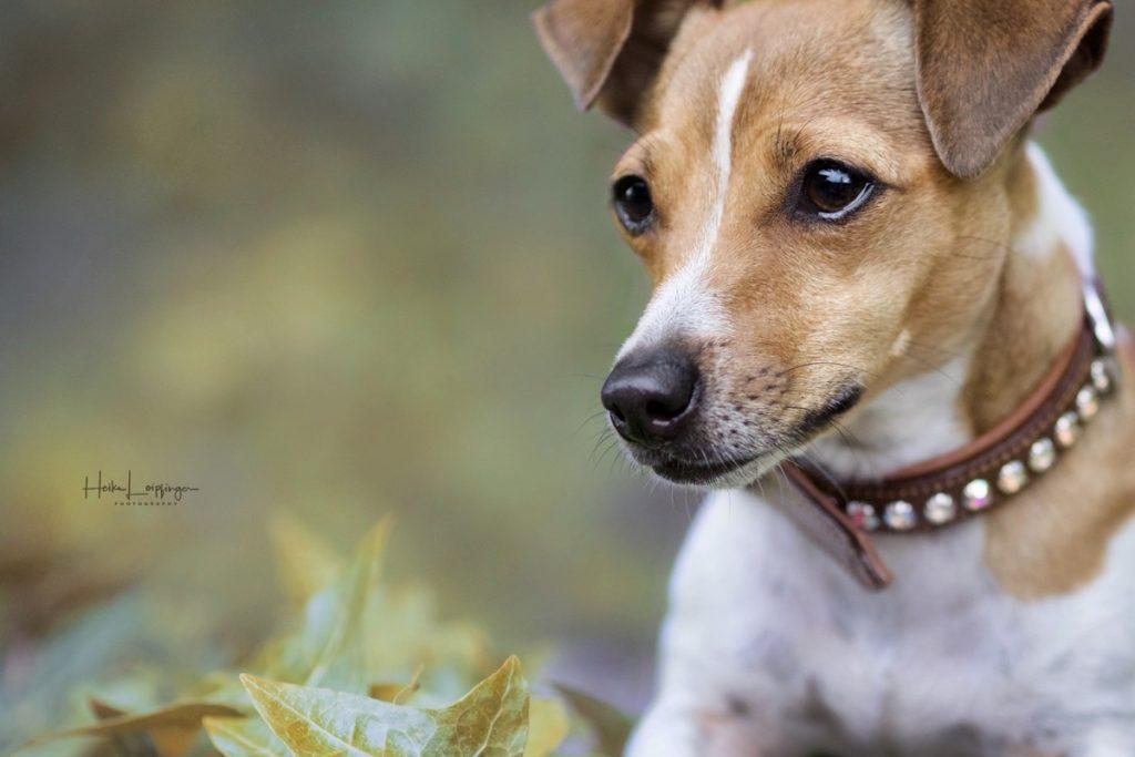 Tierfotografie Hund Schwieberdingen