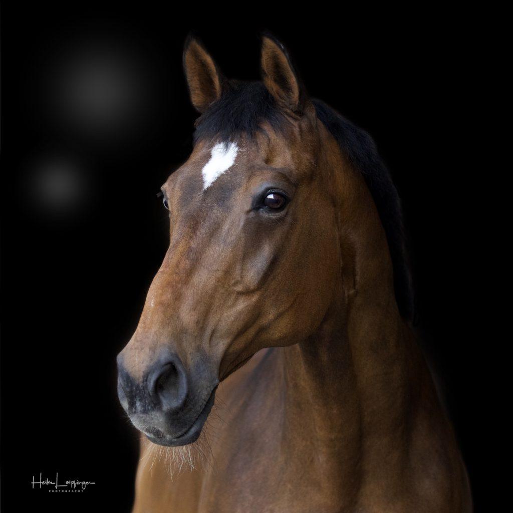 Tierfotografie Pferd Stuttgart