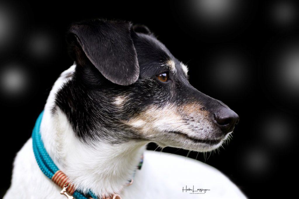 Tierfotografie Hundeportrait Waldenbuch