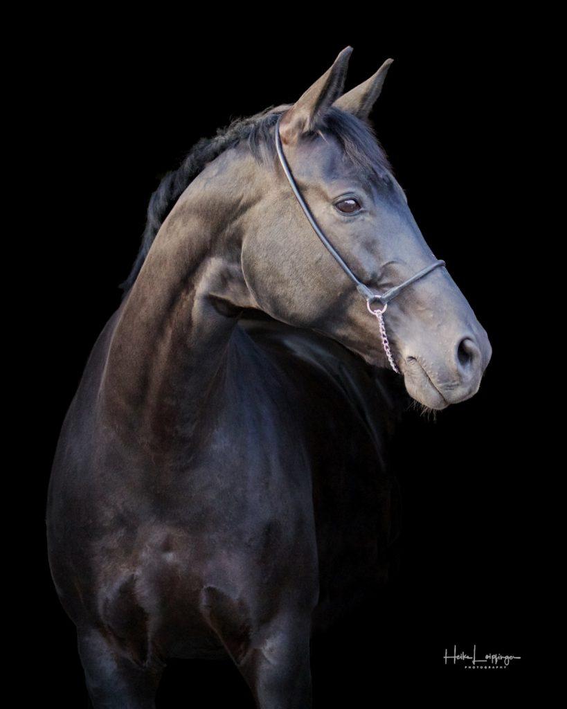 Tierfotografie Pferdeportrait Aidlingen