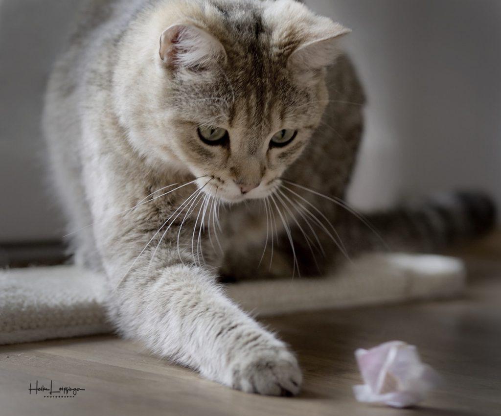 Tierfotografie spielende Katze Stuttgart
