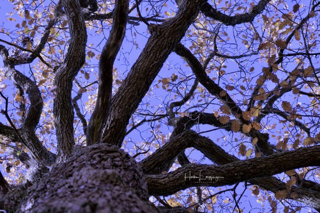 Landschaftsfotografie Baum Sachsenheim