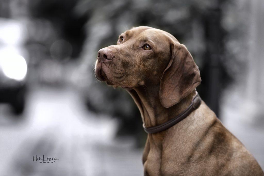 Tierfotografie Hund Besigheim