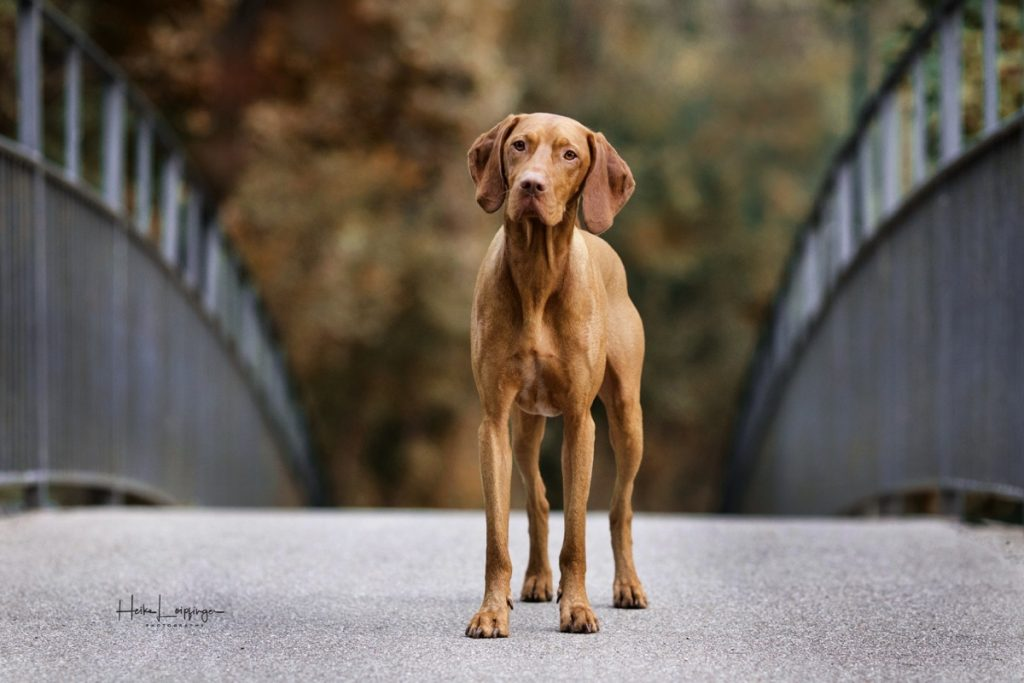 Tierfotografie Hund Brücke