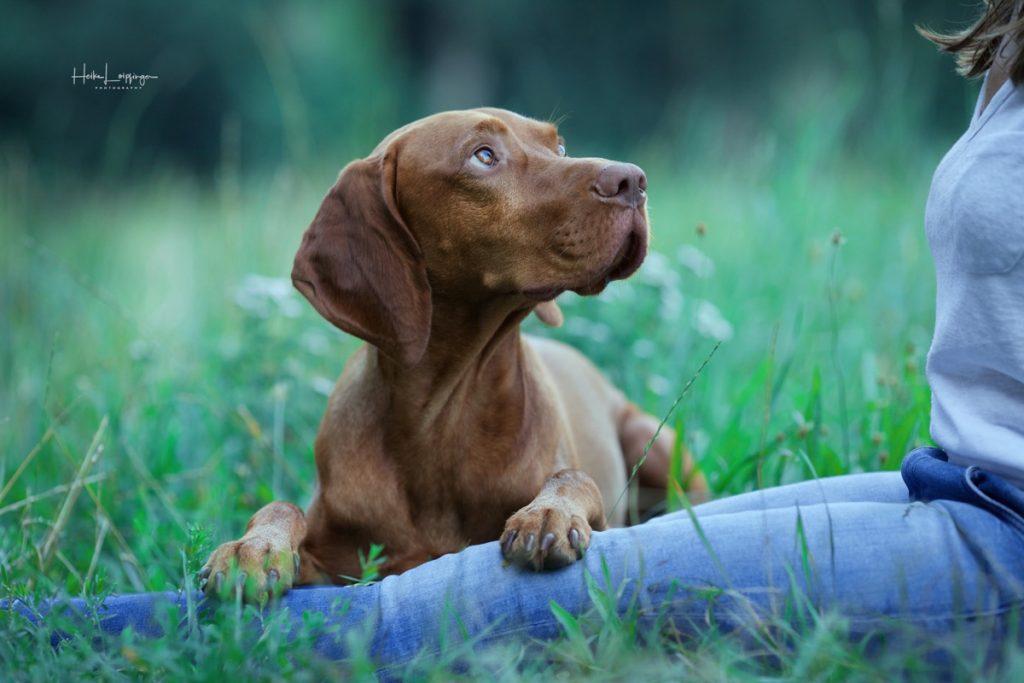 Tierfotografie Hund Enz