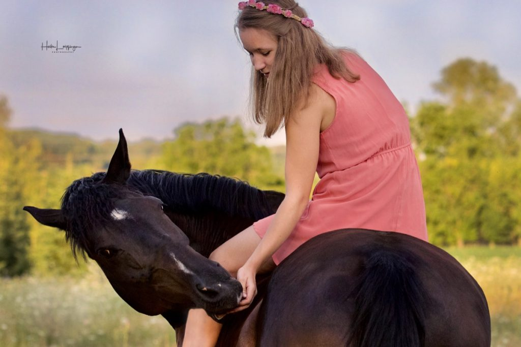 Tierfotografie Pferd Riet Koppel