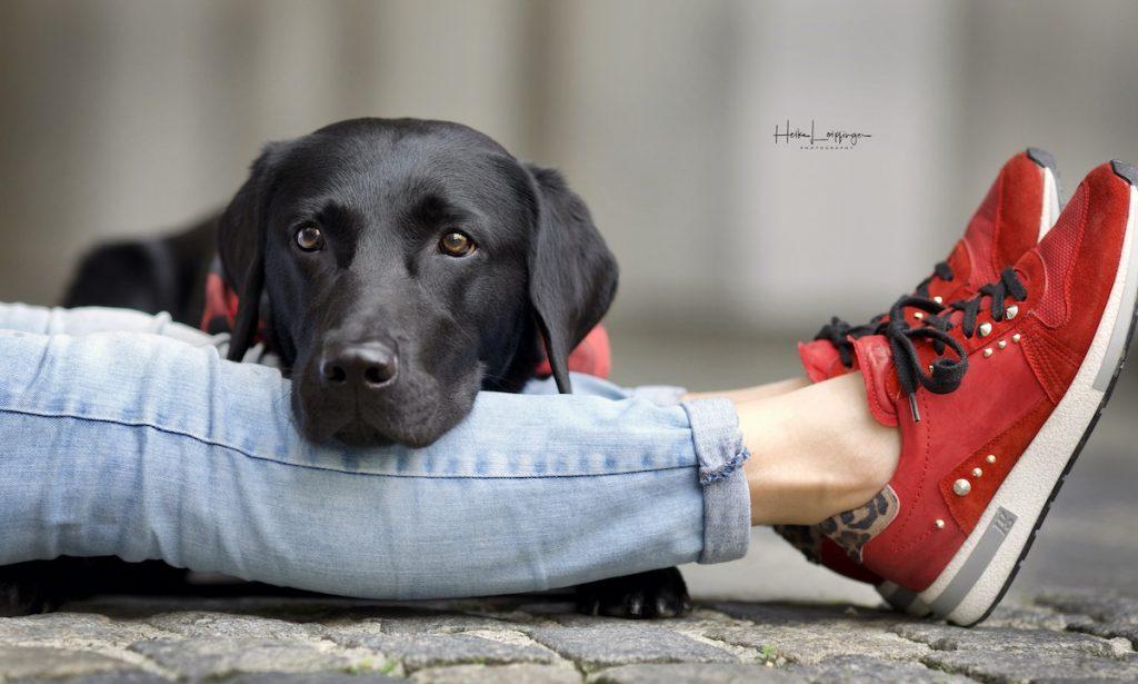 Tierfotografie Hund Meckenbeuren