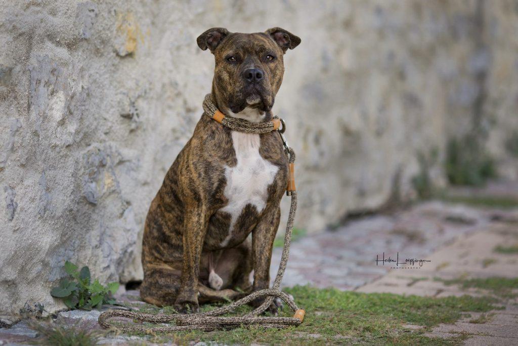 Tierfotografie Hund Merklingen