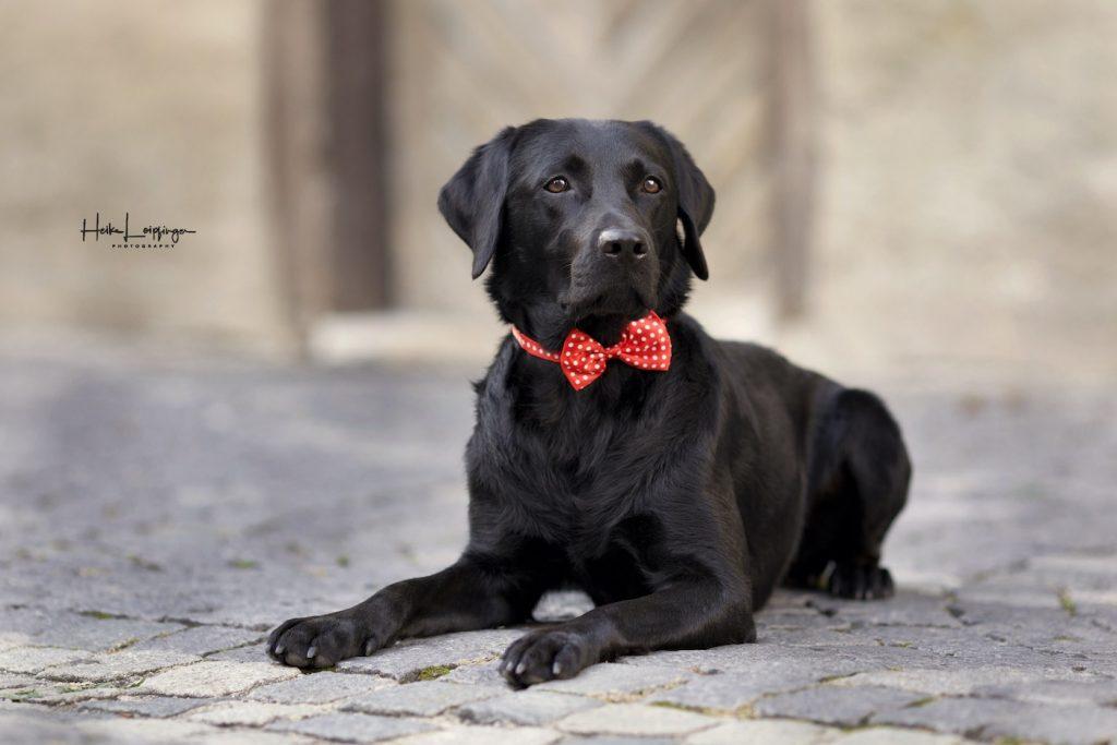 Tierfotografie Hund RV3