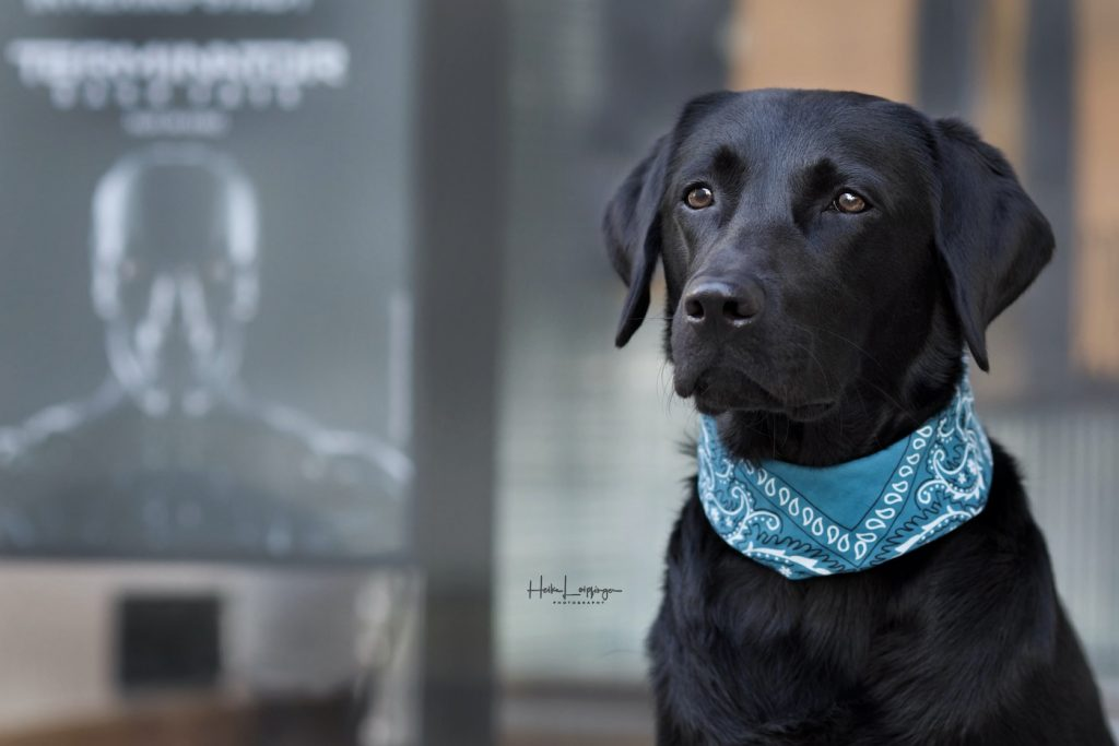 Tierfotografie Hund RV4