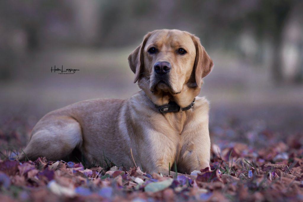 Tierfotografie Hund Rutesheim