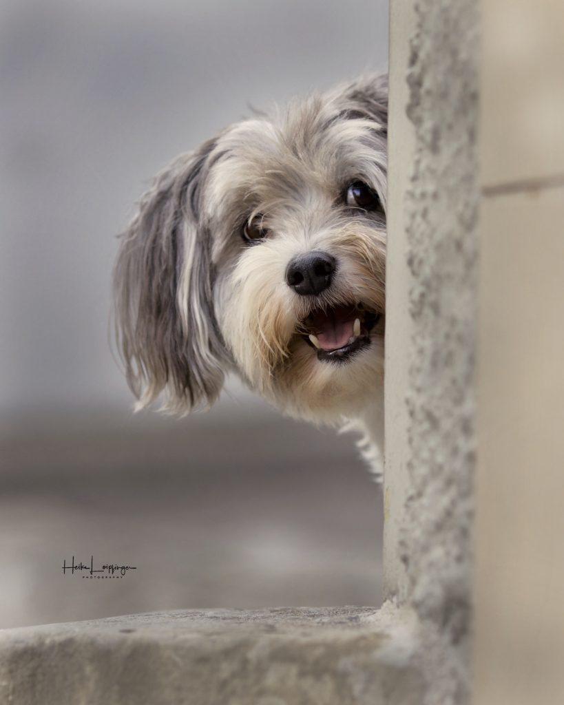 Tierfotografie Hund Vai2