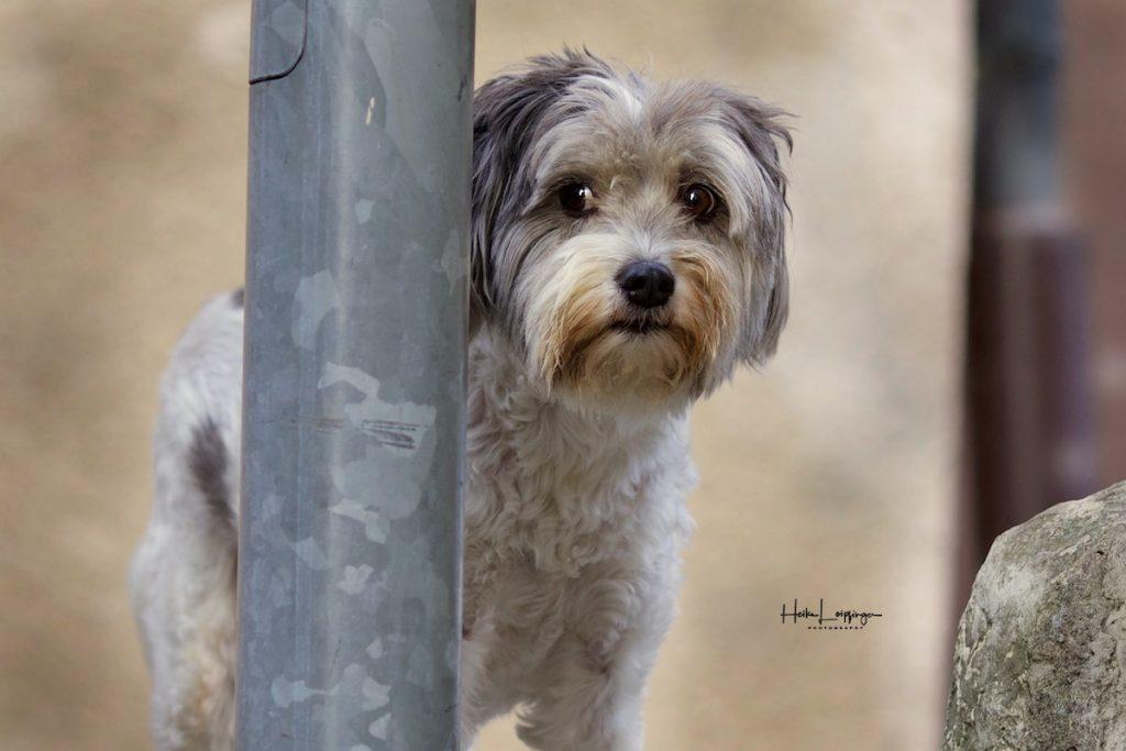 Tierfotografie Hund Vaihingen Enz