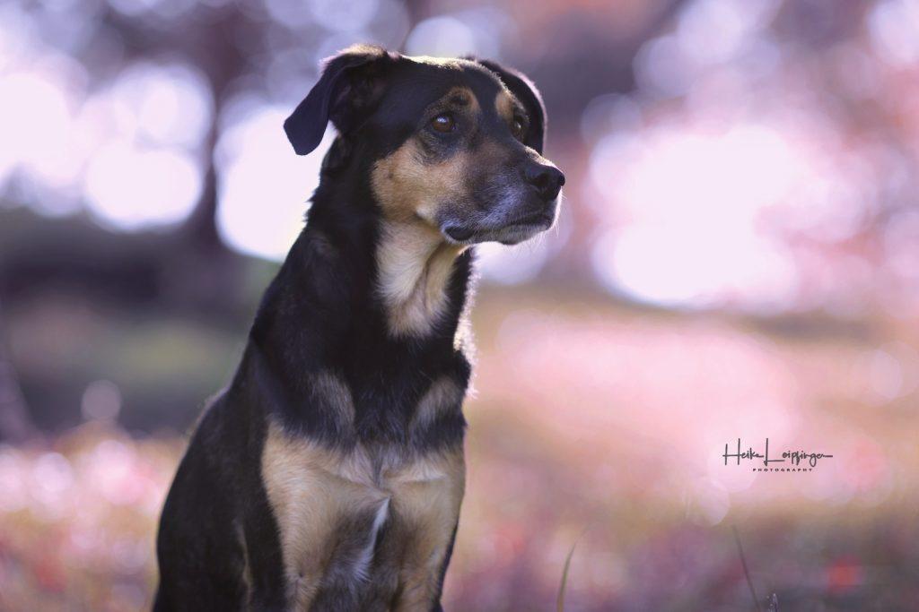 Tierfotografie Hund Weissach