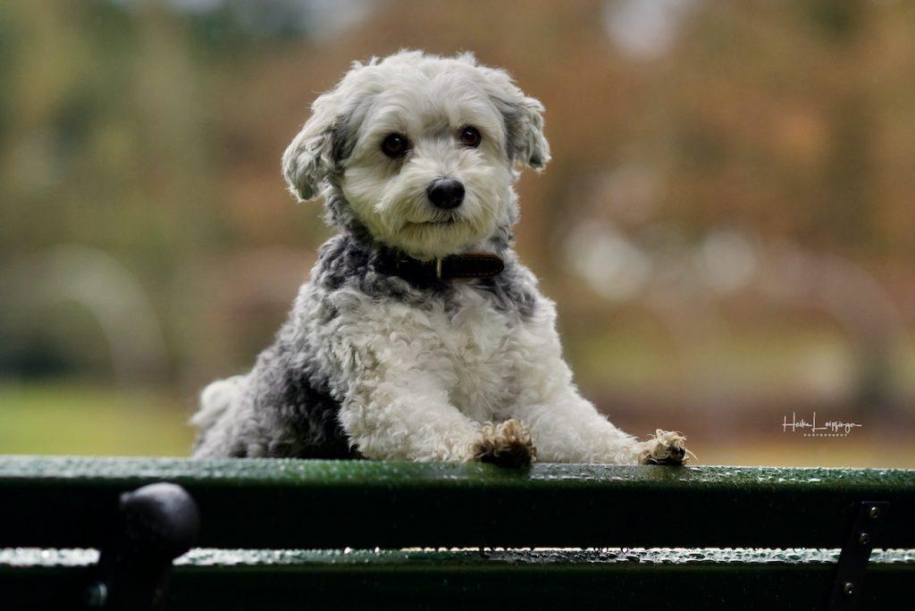 Tierfotografie Hund Bodensee