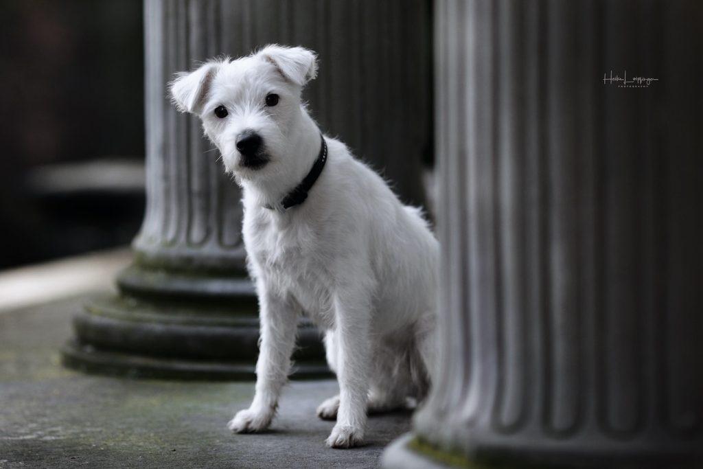 Tierfotografie Hund Lindau