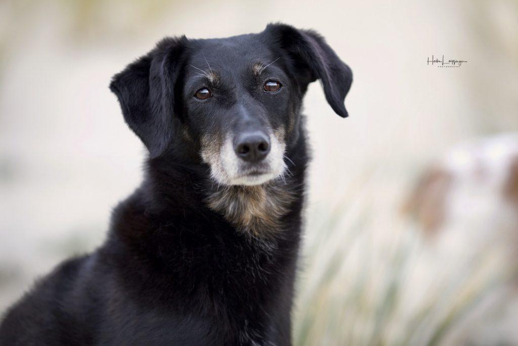 Tierfotografie Hund auf Texel