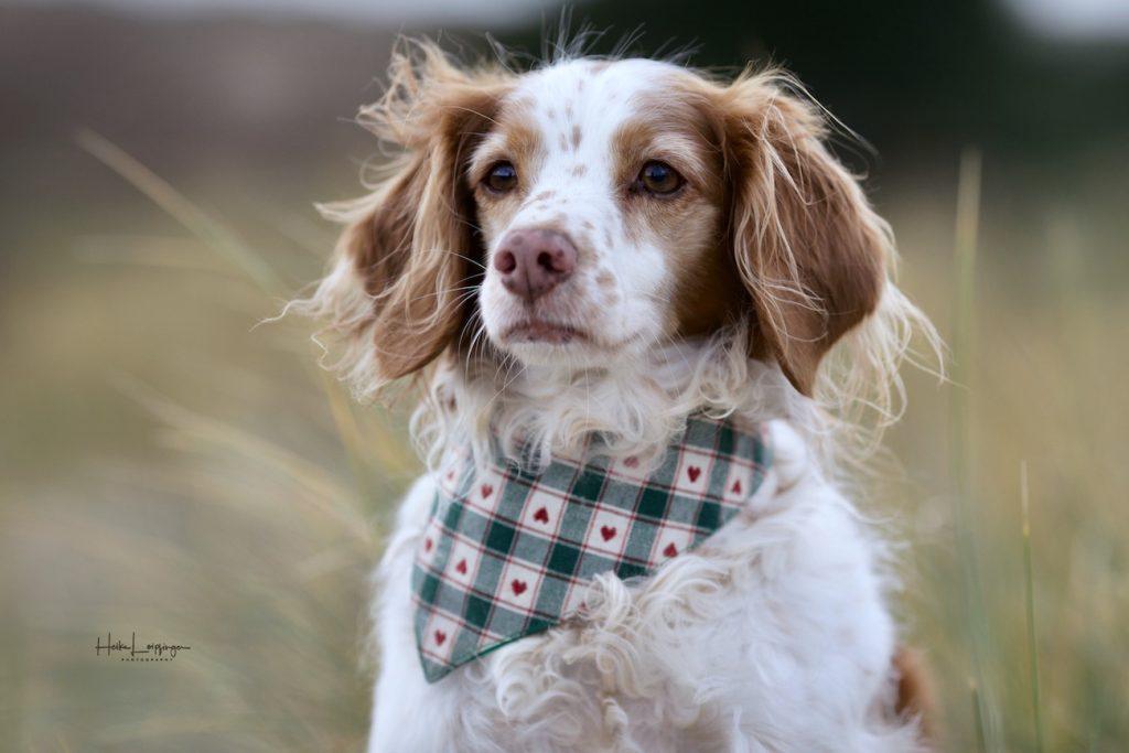 Tierfotografie Hunde Texel